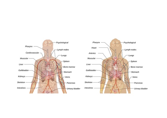 popis orgánů
